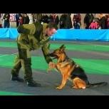 Дрессировка собак. Кинолог, Томск