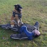 Дрессировка собак, Томск