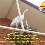 продается пансионат для летнего отдыха в Крыму г.Саки, Томск