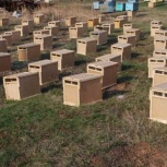 Пчёлы. Пчелопакеты, Томск